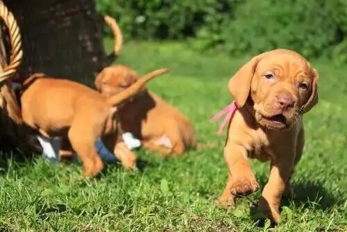 çimlerde sosyalleşen köpekler