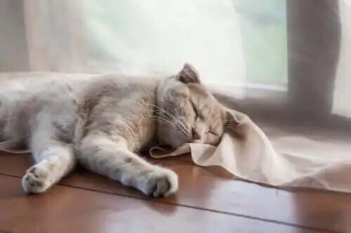 yerde yatan kedi