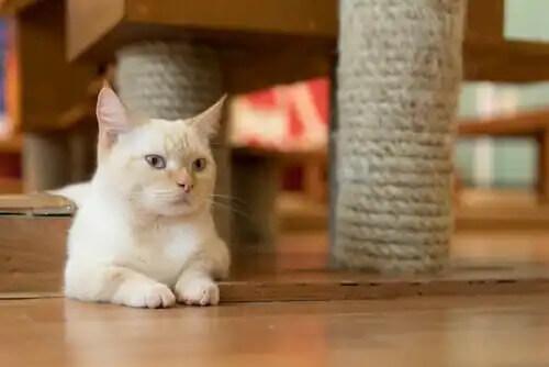yerde yatan beyaz kedi
