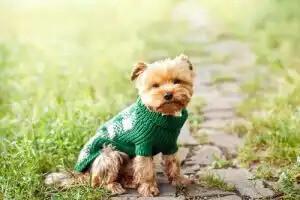 yeşil hırka giymiş köpek
