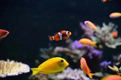 akvaryumda yüzen renkli balıklar