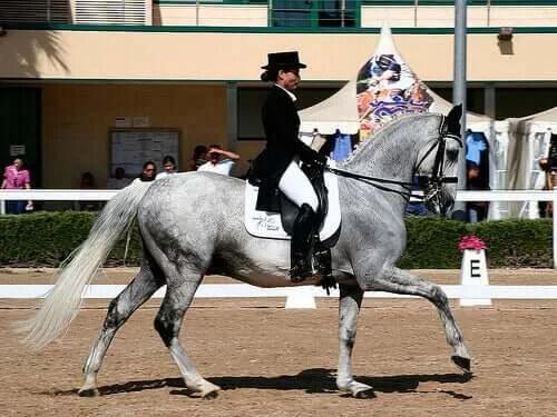 Atlar Hakkında 15 Büyüleyici Gerçek