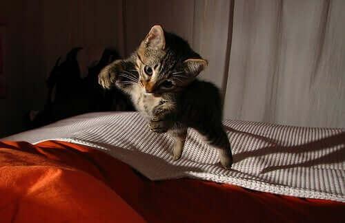 Kediler Yüksekten Düşünce Kurtulabilir, Alçak Düşmelerden Kurtulamaz