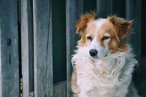 Bağımsız Evcil Hayvanlar