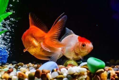 En İyi Balık Yemi İpuçlarını Keşfedin
