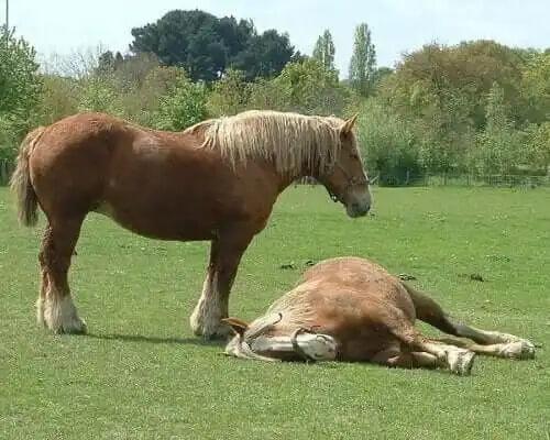 biri yatan iki at