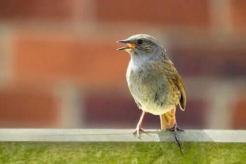 cam kenarında duran minik kuş
