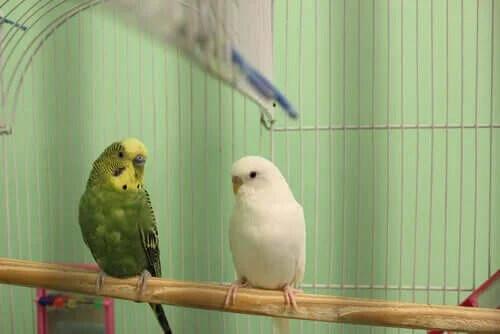 Evcil Hayvan Olarak Kuş Seçerken Nelere Dikkat Edilmelidir?