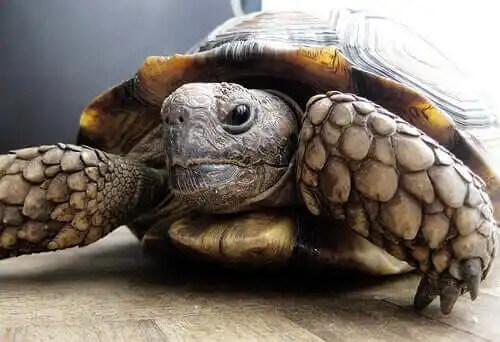 yakın çekim kaplumbağa