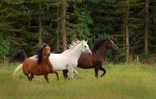 kırda koşan atlar