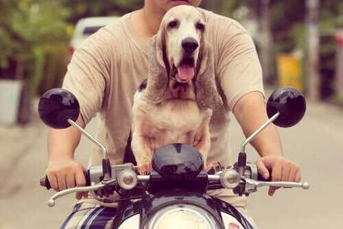 Köpeğinizle Nasıl Motosiklet Süreceğinizi Öğrenin!