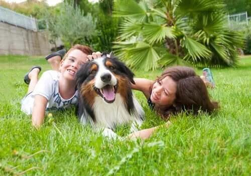 Büyük veya Küçük Köpek: Bir Çocuğun En İyi Arkadaşı