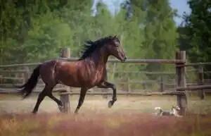 çiftlikte koşan at