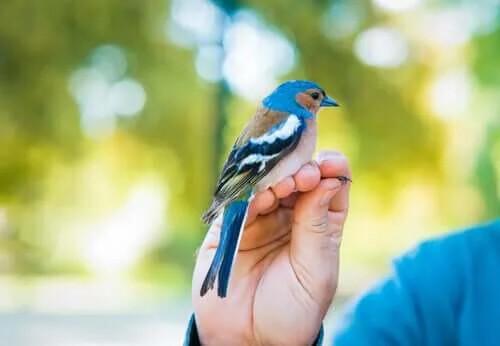 Kuşlardaki Kurtlar Nasıl Yok Edilir?