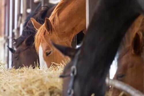 Atınızı Neyle Beslemelisiniz?