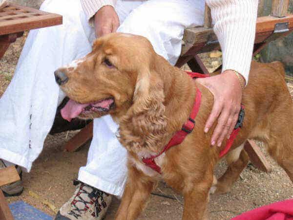 sahibiyle oturan kırmızı tasmalı köpek