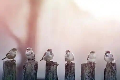sıra sıra dizilmiş kuşlar