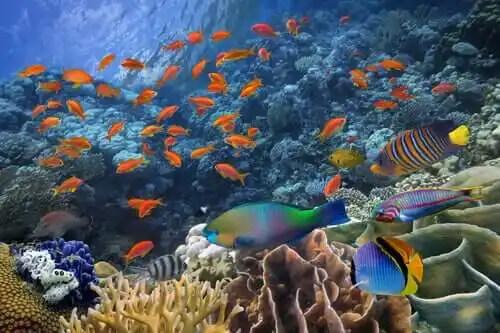 akvaryumda tropikal balıklar