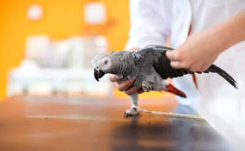 Yaralı Bir Kuşun Tedavisi Hakkında Her Şeyi Öğrenin