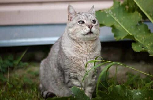Yaşlı Kedi Hastalıkları: Bilmeniz Gerekenler