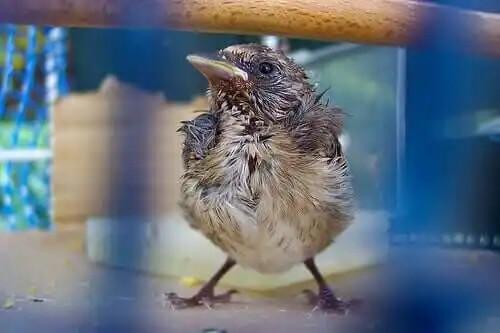 yoluk didik olmuş küçük kuş