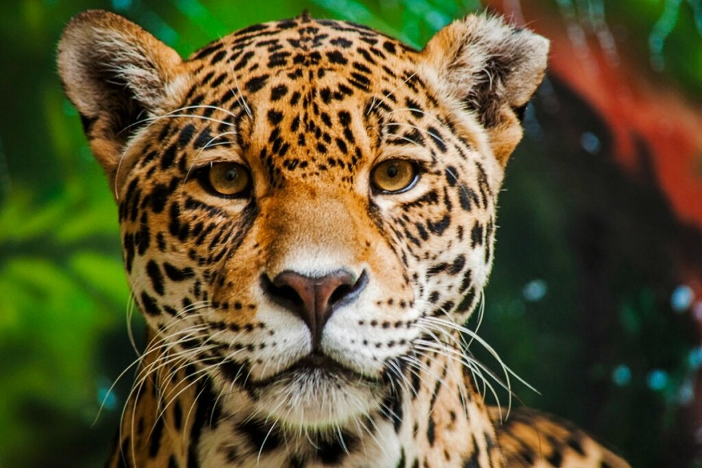 Amazon'daki En Tehlikeli 15 Hayvan